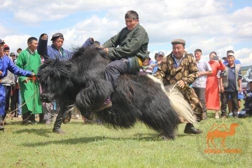 Фото фестиваль яков в Монголии