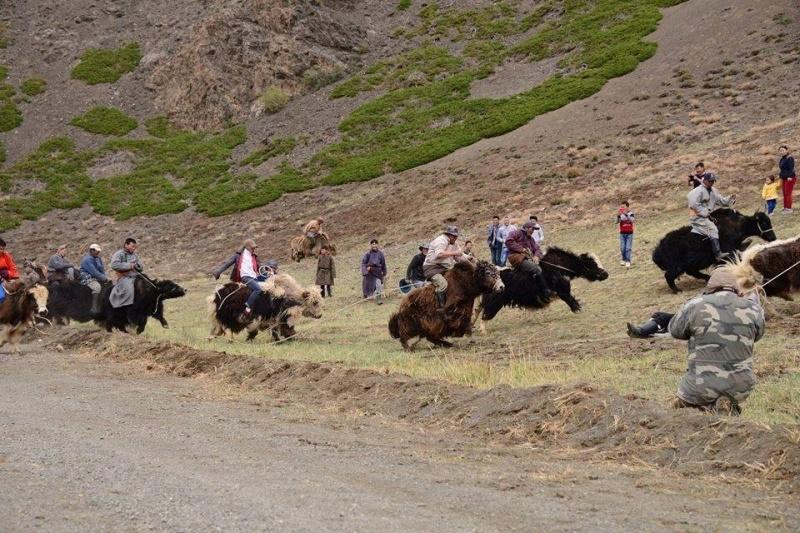 Фестиваль яков в Монголии фото