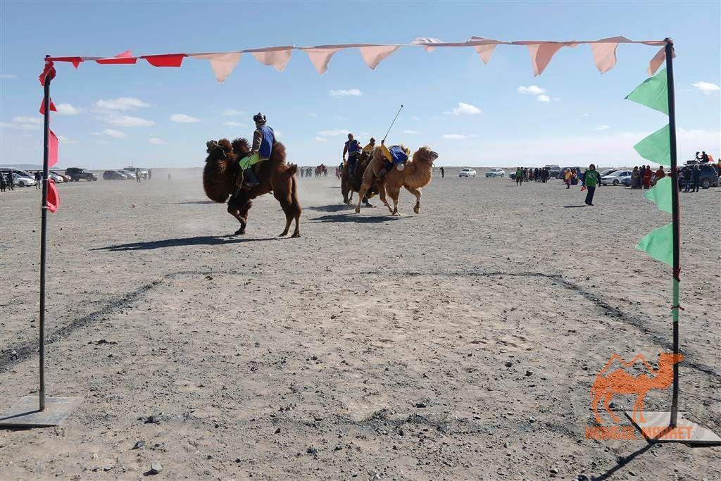 фото фестиваль верблюдов