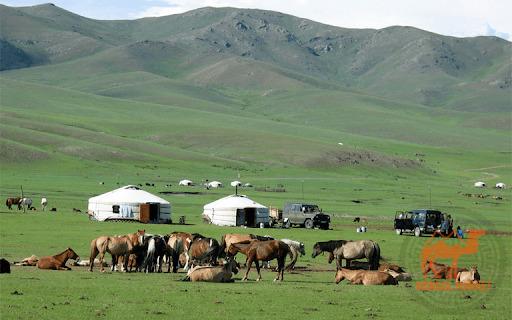 Что привизти из Монголии Фото